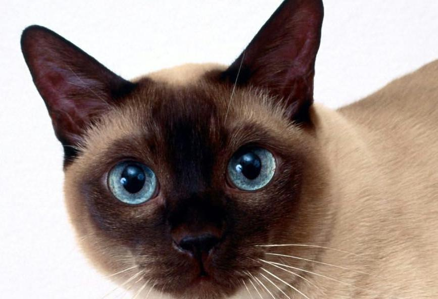 True story  Η γάτα - κλέφτης με... λεία εσώρουχα και κάλτσες ... f0ebcf67e54