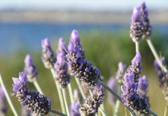 Τα 5 βότανα που δρουν εναντία στο άγχος  - Κεντρική Εικόνα