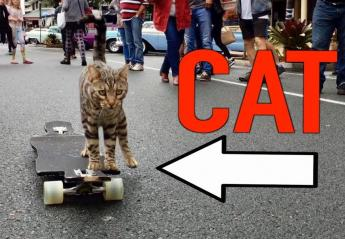 Αυτός ο γάτος μπορεί και κάνει skate [βίντεο] - Κεντρική Εικόνα
