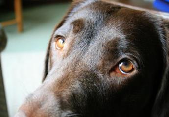 """Μήπως ο σκύλος σου σε χειραγωγεί; Η επιστήμη λέει """"ναι"""" - Κεντρική Εικόνα"""