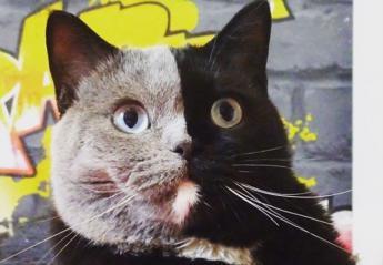 Αυτή η σπάνια γάτα έχει γίνει σταρ στο Διαδίκτυο [εικόνες & βίντεο] - Κεντρική Εικόνα