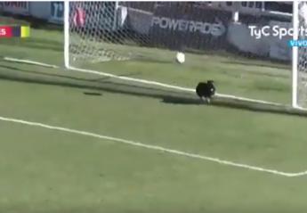 Σκύλος έκανε τη πιο θεαματική απόκρουση σε αγώνα ποδοσφαίρου [βίντεο] - Κεντρική Εικόνα