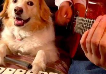 Αυτός ο σκύλος παίζει μουσικά όργανα και το κάνει καλά (vid) - Κεντρική Εικόνα