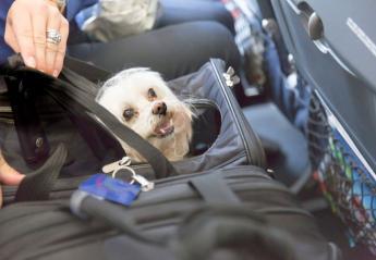 Ένα σκυλάκι πέθανε σε αεροπορική πτήση και πολλοί εξοργίστηκαν - Κεντρική Εικόνα