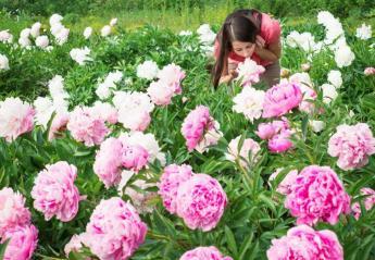 6 φυτά που θεωρείται πως φέρνουν τύχη [εικόνες] - Κεντρική Εικόνα
