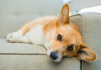 Το ήξερες πως υπάρχουν audio books για σκύλους;  - Κεντρική Εικόνα