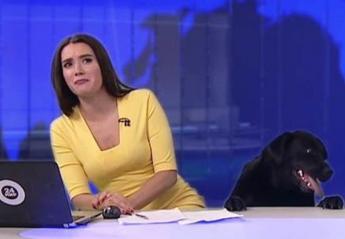 Σκύλος κατατρόμαξε μια τηλεπαρουσιάστρια δελτίου ειδήσεων [βίντεο] - Κεντρική Εικόνα