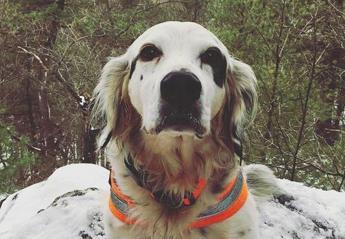 Αυτός ο σκύλος έχασε τη ζωή του για να σώσει τους φίλους του [εικόνες] - Κεντρική Εικόνα