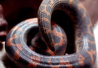 Τώρα μπορείς να δώσεις το όνομα του/της πρώην σου σε ένα φίδι!  - Κεντρική Εικόνα
