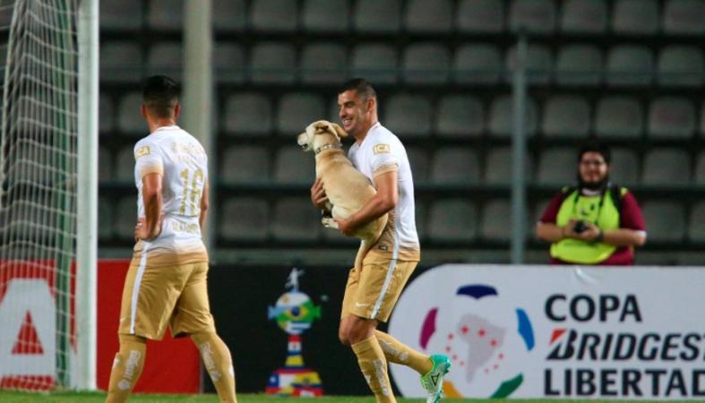 Εκστασιασμένος σκύλος το γλεντάει σε αγώνα του Κόπα Λιμπερταδόρες [βίντεο] - Κεντρική Εικόνα