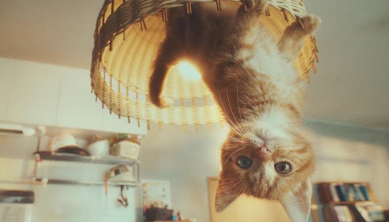 Ένα γατάκι στο σποτ του παιχνιδιού Gravity Rush 2 κλέβει καρδιές [βίντεο] - Κεντρική Εικόνα