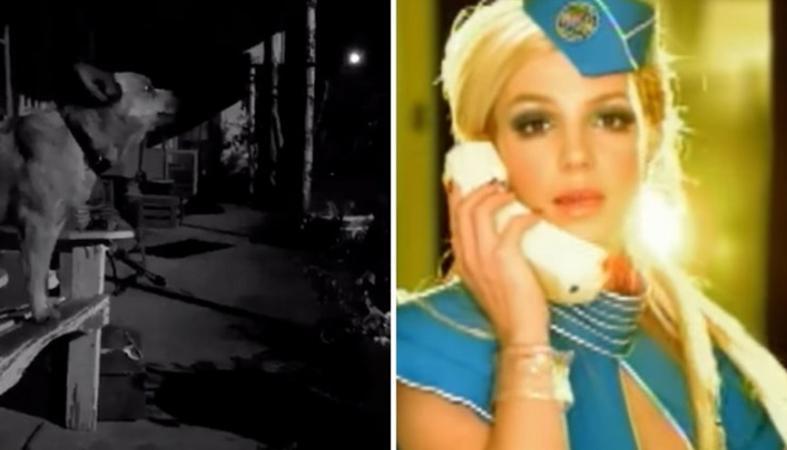 """Σκύλος... τραγουδά το """"Toxic"""" της Britney Spears; [βίντεο] - Κεντρική Εικόνα"""