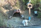 Αυτός ο σκύλος στη Ναύπακτο έχει συγκινήσει τους πάντες [βίντεο] - Κεντρική Εικόνα